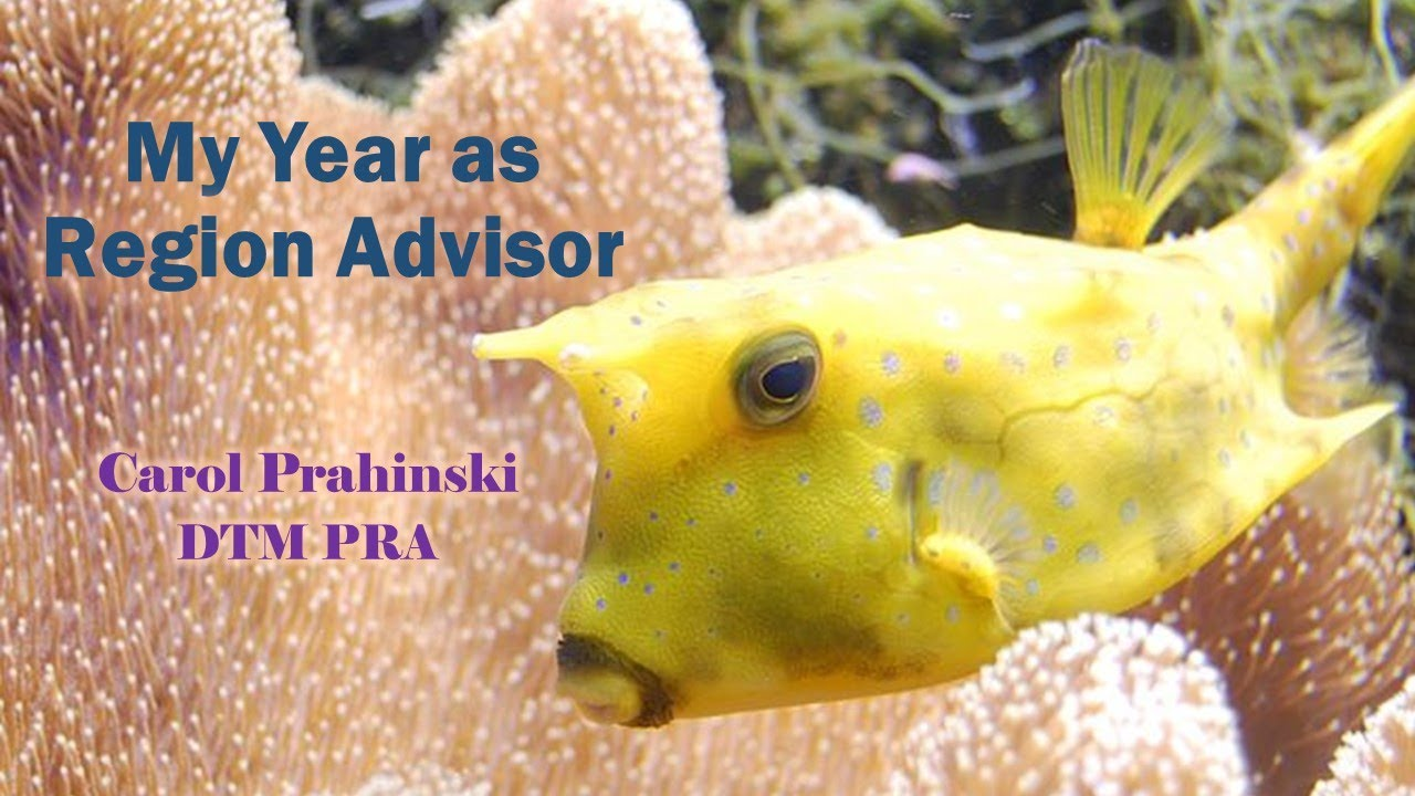 Webinar: My Year as Region Advisor by Carol Prahinski